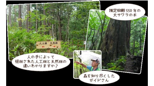 天然林・人工林の山歩き見学